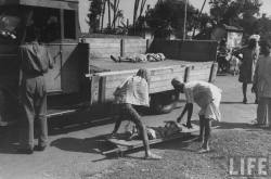 No bodies ... no famine ... What famine ... ? The British efficiently disposed of the bodies in Kolktta. (Picture by life.com; courtesy - oldindianphotos.blogspot.com.).